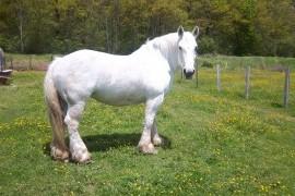 Votre cheval